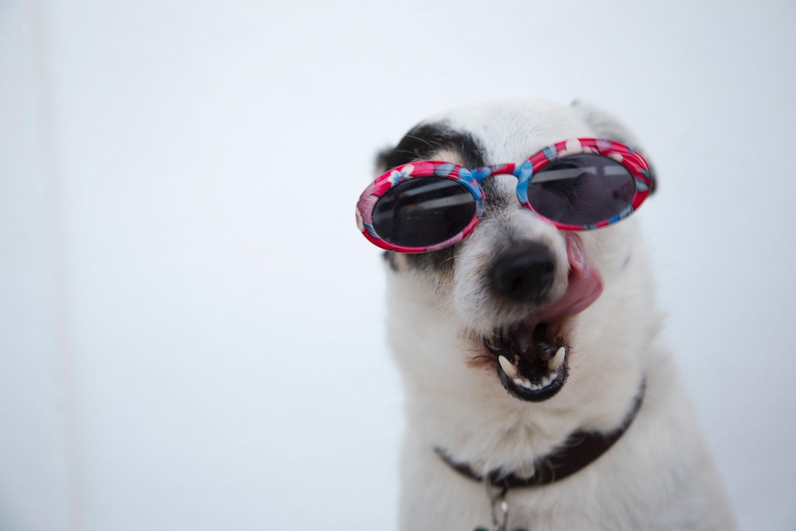 Warum trinken Hunde Regenwasser?